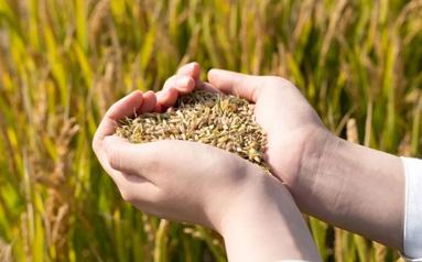 二十國集團農業部長會議閉幕:多維度實現糧食安全