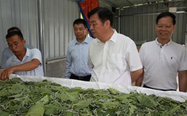 """保利中丝:以""""一带一路""""为契机 振兴桑蚕丝绸产业"""